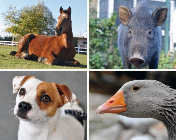 Alle Tiere